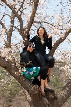 Beautiful girls in a beautiful tree
