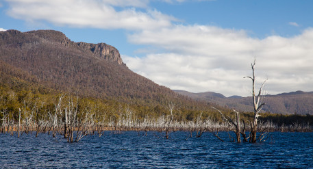 Flooded forest at Lake Rowallan