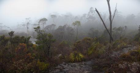 Regen, Nebel und Sturmböen