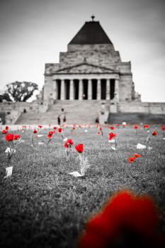 Red flowers remind of fallen Australian soldiers